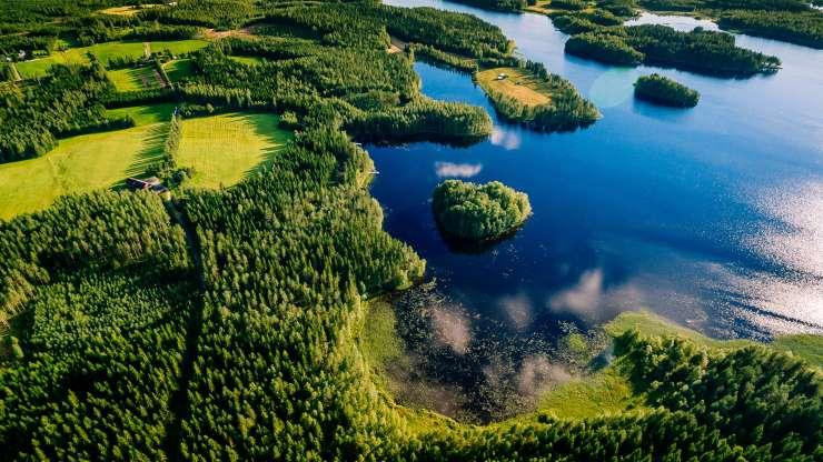 Kerätään yhdessä 10 000 euroa ikimetsien suojeluun